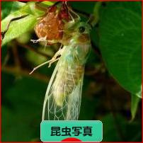 にほんブログ村 写真ブログ 昆虫写真へ