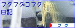 にほんブログ村 観賞魚ブログ フグへ