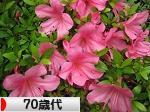にほんブログ村 シニア日記ブログ 70歳代へ