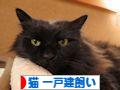 にほんブログ村 猫ブログ 猫 一戸建飼いへ