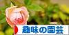 にほんブログ村 花・園芸ブログ 趣味の園芸へ