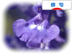 にほんブログ村 ポエムブログ 俳句へ
