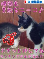 にほんブログ村 猫ブログ 猫 里親募集へ