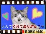 にほんブログ村 猫ブログ 猫 闘病記(永眠)へ