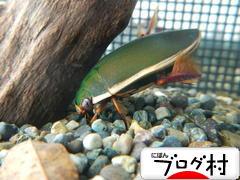 にほんブログ村 その他ペットブログ 昆虫へ