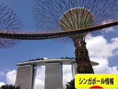にほんブログ村 海生活ブログ シンガポール情報へ