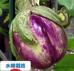 にほんブログ村 花・園芸ブログ 水耕栽培へ