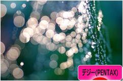 にほんブログ村 写真ブログ デジタル一眼(PENTAX)へ