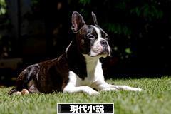 にほんブログ村 小説ブログ 現代小説へ