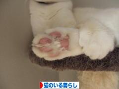 にほんブログ村 猫ブログ 猫のいる暮らしへ