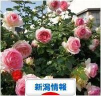 にほんブログ村 地域生活(街) 中部ブログ 新潟県情報へ