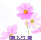 にほんブログ村 花・園芸ブログ 身近な花へ
