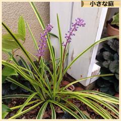 にほんブログ村花・園芸ブログ小さな庭へ