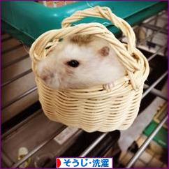 にほんブログ村 その他生活ブログ そうじ・洗濯へ