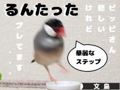 にほんブログ村 鳥ブログ 文鳥へ