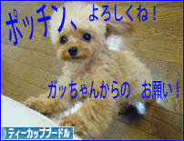にほんブログ村 犬ブログ ティーカッププードjルへ