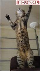 にほんブログ村 猫ブログ 猫のいる暮らしバナー☆いつもありがとねヾ(@^▽^@)ノヾ(@^▽^@)ノヾ(@^▽^@)ノ