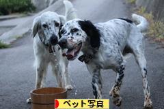 にほんブログ村 写真ブログ ペット写真へ
