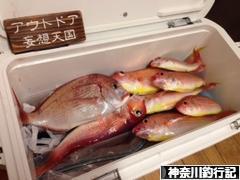 にほんブログ村 釣りブログ 神奈川釣行記へ