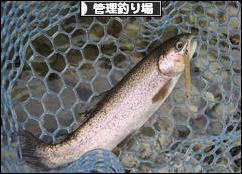 にほんブログ村 釣りブログ 管理釣り場へ