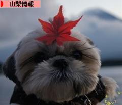 にほんブログ村 地域生活(街) 中部ブログ 山梨県情報へ