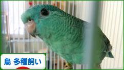 にほんブログ村 鳥ブログ 鳥 多種飼いへ
