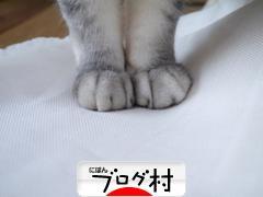 にほんブログ村 教育ブログ 日本語教育へ