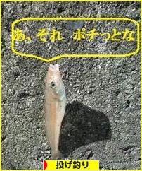 https://fishing.blogmura.com/nageduri/img/originalimg/0000086757.jpg