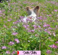 にほんブログ村 その他日記ブログ つれづれへ
