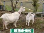 にほんブログ村 地域生活(街) 関西ブログ 淡路(市)情報へ