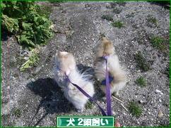 にほんブログ村 犬ブログ 犬 2頭飼いへ