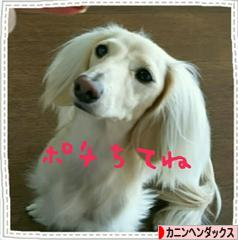 にほんブログ村 犬ブログ カニンヘンダックスフンドへ