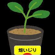 にほんブログ村 花・園芸ブログ 畑いじり・畑仕事へ