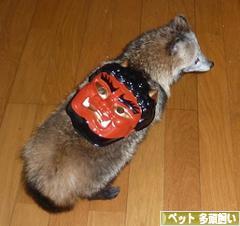 にほんブログ村 その他ペットブログ その他ペット 多頭飼いへ