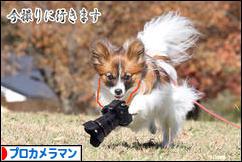 にほんブログ村 写真ブログ プロカメラマンへ