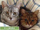 にほんブログ村 猫ブログ エジプシャンマウへ
