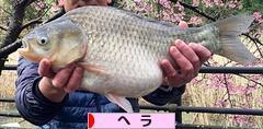 http://fishing.blogmura.com/hera/img/originalimg/0000917096.jpg