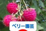 にほんブログ村 花ブログ ベリー園芸へ