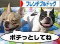 にほんブログ村 犬ブログ aへ