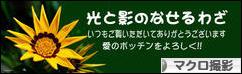 にほんブログ村 写真ブログ マクロ撮影へ