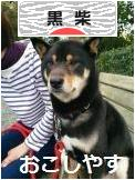 にほんブログ村 犬ブログ 黒柴犬へ