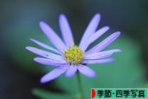 にほんブログ村 写真ブログ 季節・四季写真へ