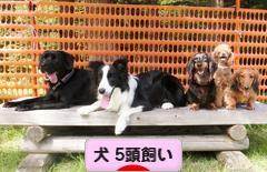 にほんブログ村 犬ブログ 犬 5頭飼いへ