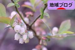 にほんブログ村 地域生活(街) 四国ブログへ