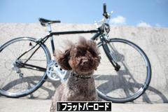 にほんブログ村 自転車ブログ フラットバーロードへ