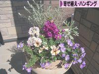 にほんブログ村 花・園芸ブログ 寄せ植え・ハンギングへ