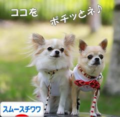 にほんブログ村 犬ブログ スムースチワワへ
