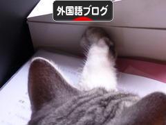 にほんブログ村 外国語ブログ(日本語)へ