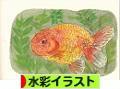 にほんブログ村 イラストブログ 水彩イラストへ