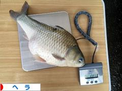 http://fishing.blogmura.com/hera/img/originalimg/0009758645.jpg